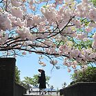 cherry blossoms in Japan by Ljikob