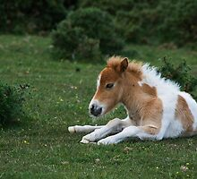 Pony found n New forest  by Elaine123