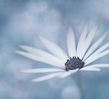 White Daisy by garts