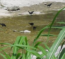 Grackle Refreshment by Navigator
