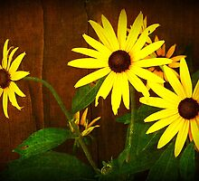 Shady Susans by Gayle Dolinger