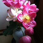 lotus flowers by Ljikob