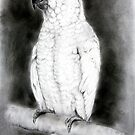 Crested white cockatoo by Lorraine  Stern