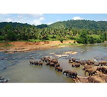 Pinnewala Elephant Orphanage. Sri Lanka. Photographic Print