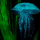 Jelly Fish by Amber  Lavallee