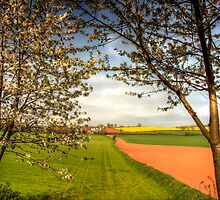 Grand Western Canal-Cherry Tree View-UK by David-J