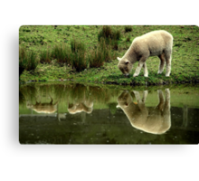 ~Reflections: Down on the Farm~ Canvas Print