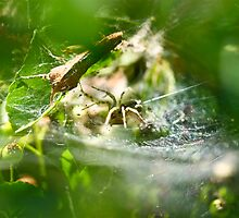 Spider by pixel-cafe .de