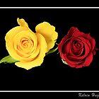 Sandras Roses by Kelvin Hughes