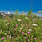 Wild Flowers at Two Light Beach by hawkeye978