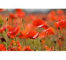 Poppy Fields Photographic Print