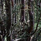 Island forest by Bluesrose