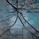 Bleeding tree by Laurent Hunziker