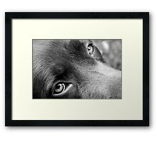 How can you say no? 7870 Framed Print