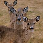 """"""" three's a crowd """" by Gerry Myers"""