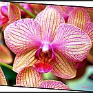 Orchid #3 by Mattie Bryant