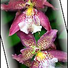 Orchid #6 by Mattie Bryant