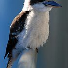 Kookaburra on Rail by voir