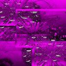 Purple Abstract  by haya1812