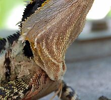 Lizard Portrait by voir