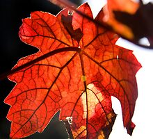 Vine Leaf by Theresa Elvin
