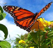 Lantana Butterfly by kurrawinya