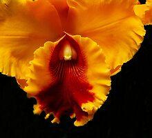 Orchid Fuego by Dennis Rubin IPA