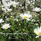 Daisy greeting card by sarnia2