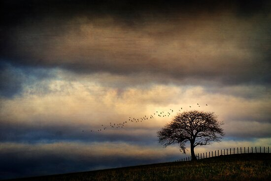 Texture Landscape by David Mould
