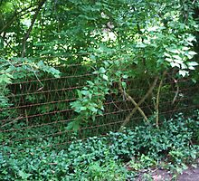 AN OLD WIRE FENCE by Pauline Evans
