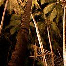 Sri Lankan Palms by Rommel Andrew Henricus
