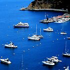 Catalina Cove by AustraliaFund12