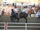 Bronc Rider Almost Off? by Sandra Gray