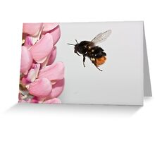 I fly through the air with the greatest of ease. Greeting Card