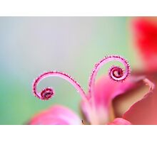 Curl Photographic Print