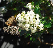Butterfly by Jboy