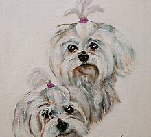 Maltese Sweeties by bjredmond