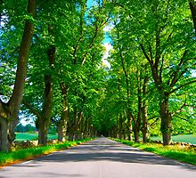 A very green summer in sweden by MX250