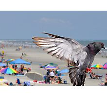 Flying Pigeon over Beach Photographic Print