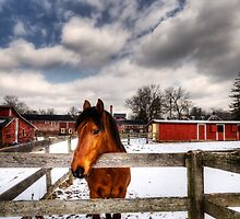Horse in the snow by MikeJagendorf