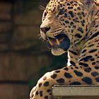 Jaguar in the Heat by Jessica Dzupina