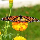 Butterfly Kisses by Darlene Bayne