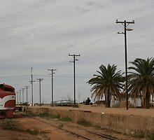 Desert Train by Sarah Harris