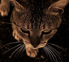 Cat in Truk Lagoon by Heather-Jayne