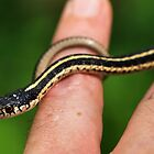 Baby Mountain Garter by Chris Morrison