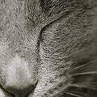 Sleepy Kitty by MeganPreece