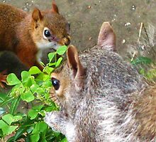 One More Squirrely Picture, For Now... by artwhiz47