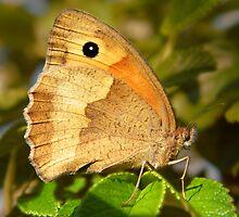 Butterfly by newfan