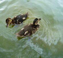 Danish Ducklings  by HeklaHekla