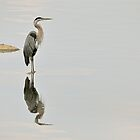 Reflections of a Heron by Monte Morton